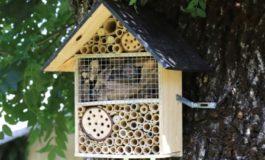 """Da Amag Ambiente: """"The Bee Hotels"""", un progetto di educazione ambientale"""