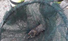 Casale, gattino finito in un vascone salvato dai Vigili del Fuoco