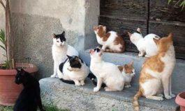 Scoppia la polemica a Vallanzengo, nel biellese, paese invaso dai gatti randagi