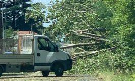 Dopo la tromba d'aria di ieri sera si inizia la conta dei danni in tutta la provincia di Alessandria