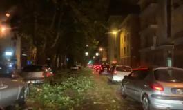 Tempesta su Alessandria e provincia: danni e decine di chiamate ai Vigili del Fuoco
