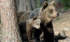 Da Leal: animalisti davanti al tribunale chiedono giustizia per l'orsa Kj2
