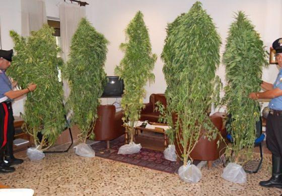 Coltivava marijuana: fermato e denunciato dai carabinieri