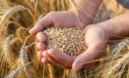 Da Coldiretti Alessandria: evitare rincari e speculazioni sul grano attivando progetti di filiera virtuosi