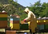Da Coldiretti Alessandria: SOS miele, rischio aumento import da Cina ed Est Europa
