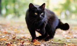 Da Aidaa – Italiambiente: quest'anno festeggiamo il gatto nero in casa coi nostri mici