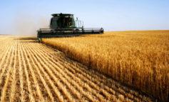 Da Coldiretti Alessandria: Causa Covid19 raddoppia import grano canadese