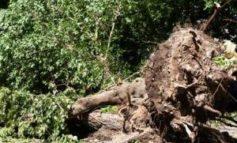 Sradica 800 piante protette al vicino: denunciato