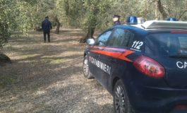 Da Coldiretti Alessandria: causa Covid escalation furti nelle campagne