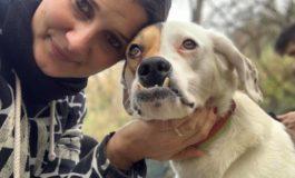 """A Canelli cura e attenzione per i cani abbandonati con l'iniziativa """"La flora aiuta la fauna"""""""