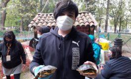 Asti: ripulite e curate dal freddo le centoventi tartarughe del laghetto dei giardini pubblici di Corso alla Vittoria