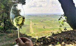 Nelle Langhe una nuova logistica green per trasportare più agevolmente il vino
