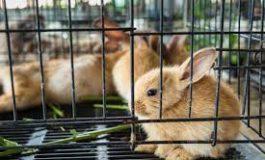 Essere gentili con gli animali non vuol dire avere gabbie più grandi ma gabbie vuote