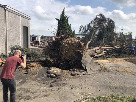 Gravemente danneggiato dal nubifragio il Bosco della Partecipanza alle porte di Trino