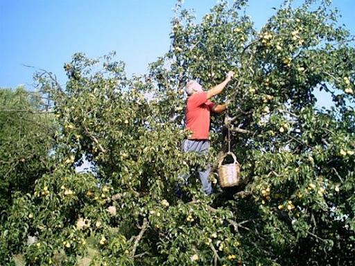 Da Coldiretti Alessandria: il 2021 anno nero per la frutta Made in Italy, raccolti al minimo da inizio secolo