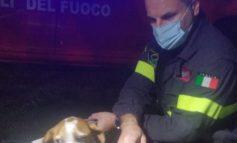 Salvato dai Vigili del Fuoco un cane caduto in un fosso vicino a Litta Parodi